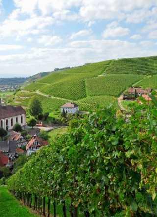Badischer Wein trifft Bayreuth